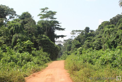 Road to Conservation, inside the Boi-Tano Forest Reserve, Ghana
